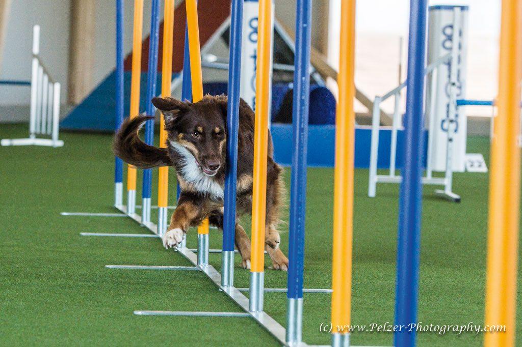 GP--Fotos-Hundesporthalle-Dahlem-001