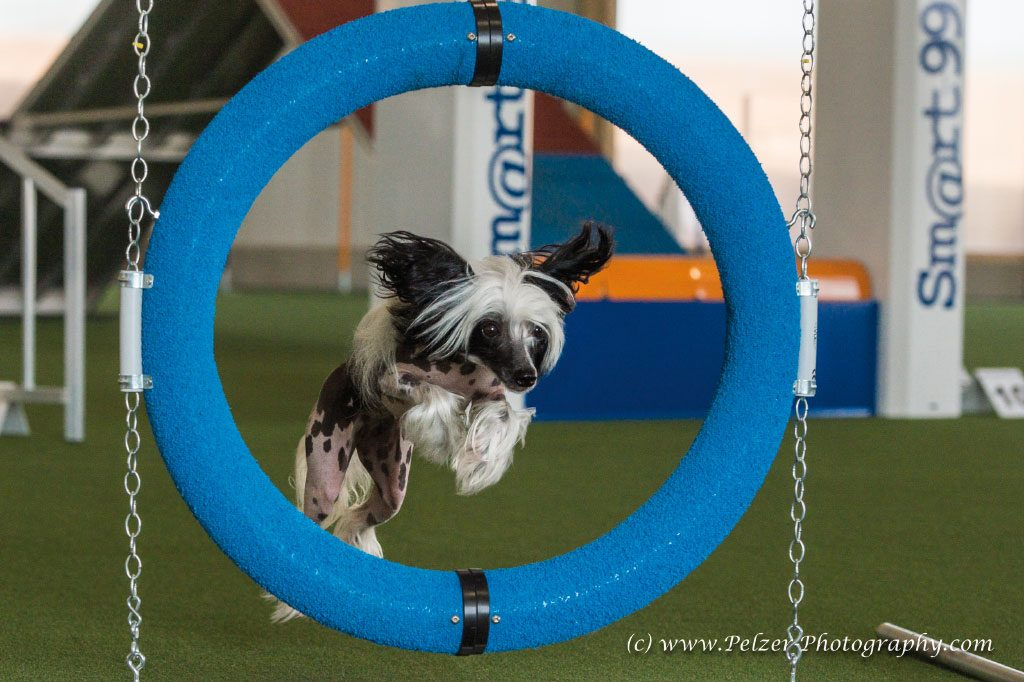 GP--Fotos-Hundesporthalle-Dahlem-008