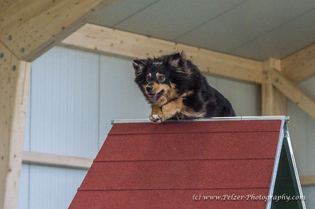 GP--Fotos-Hundesporthalle-Dahlem-009