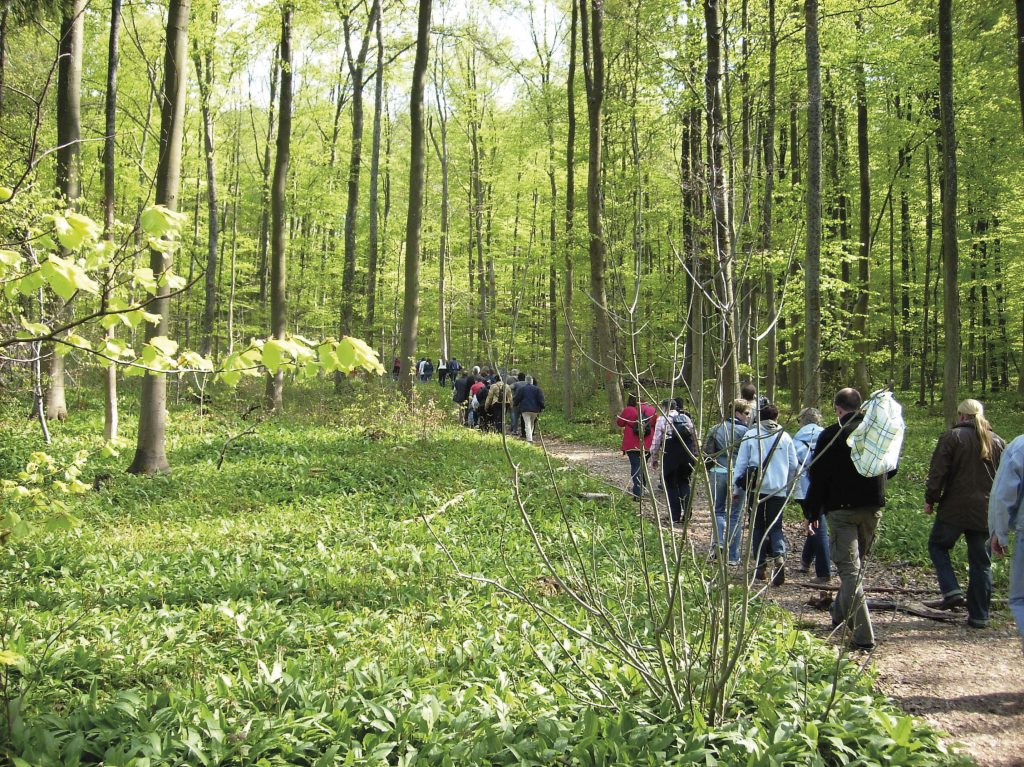 Wanderung durch den heimischen Buchenwald