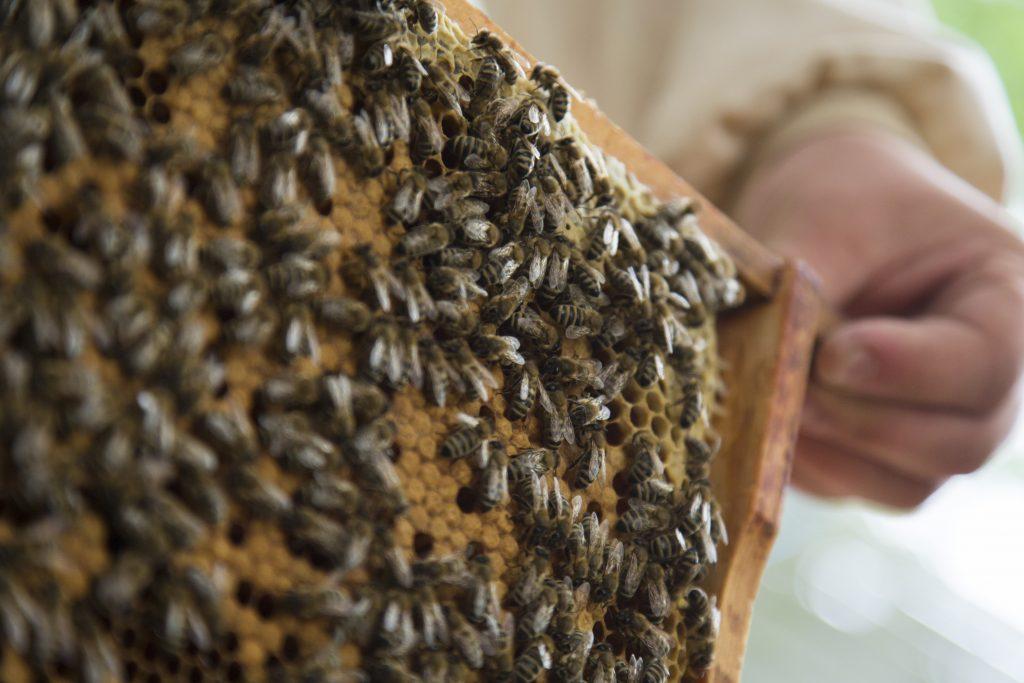 David Behrend und seine Bienen
