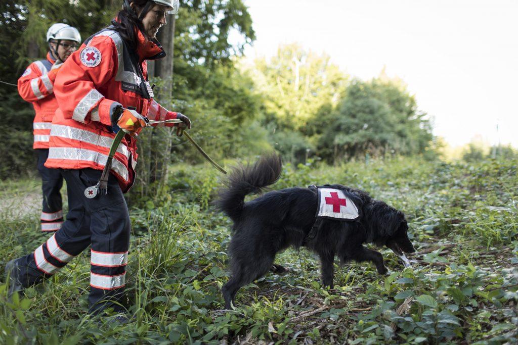 Ben von der DRK-Rettungshundestaffel Kall bei der Arbeit