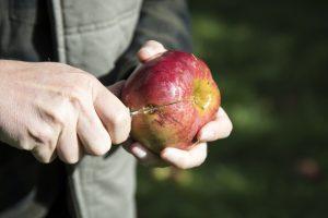 Obstbaumwart Marcel Kronenberg bedauert, dass die Massenware im Supermarkt so hochgezüchtet ist.