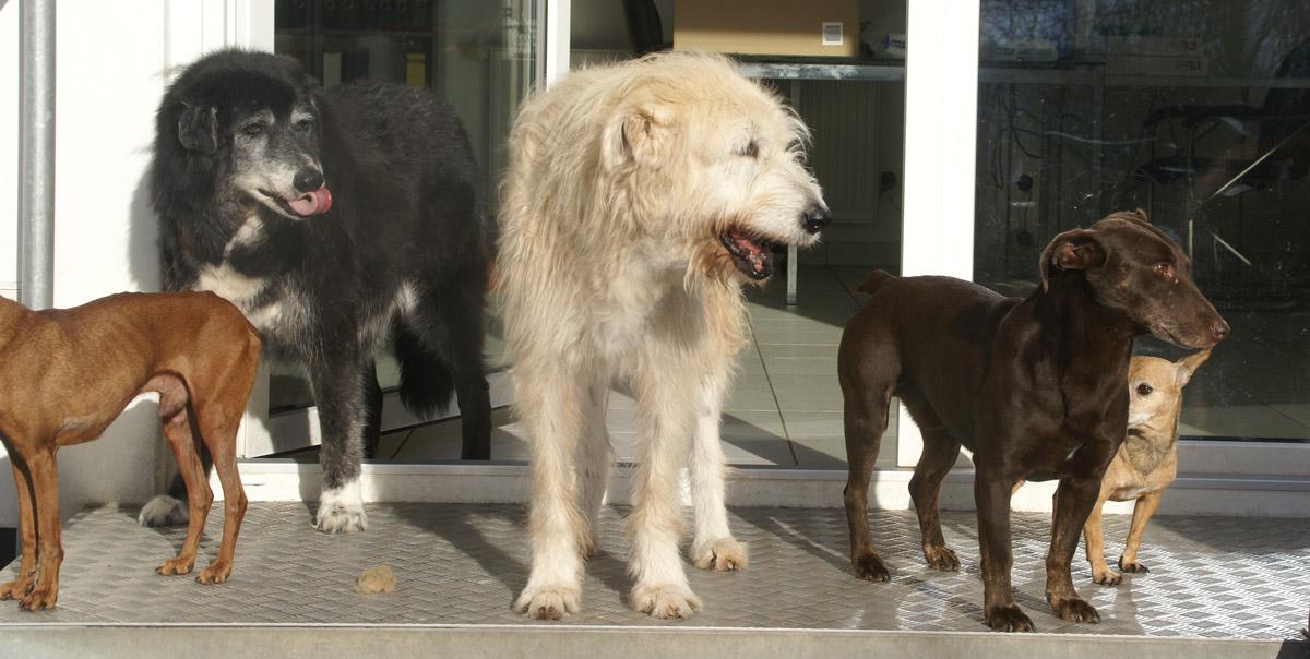 Gnadenhof Eifel: Ein Platz für alte und kranke Hunde