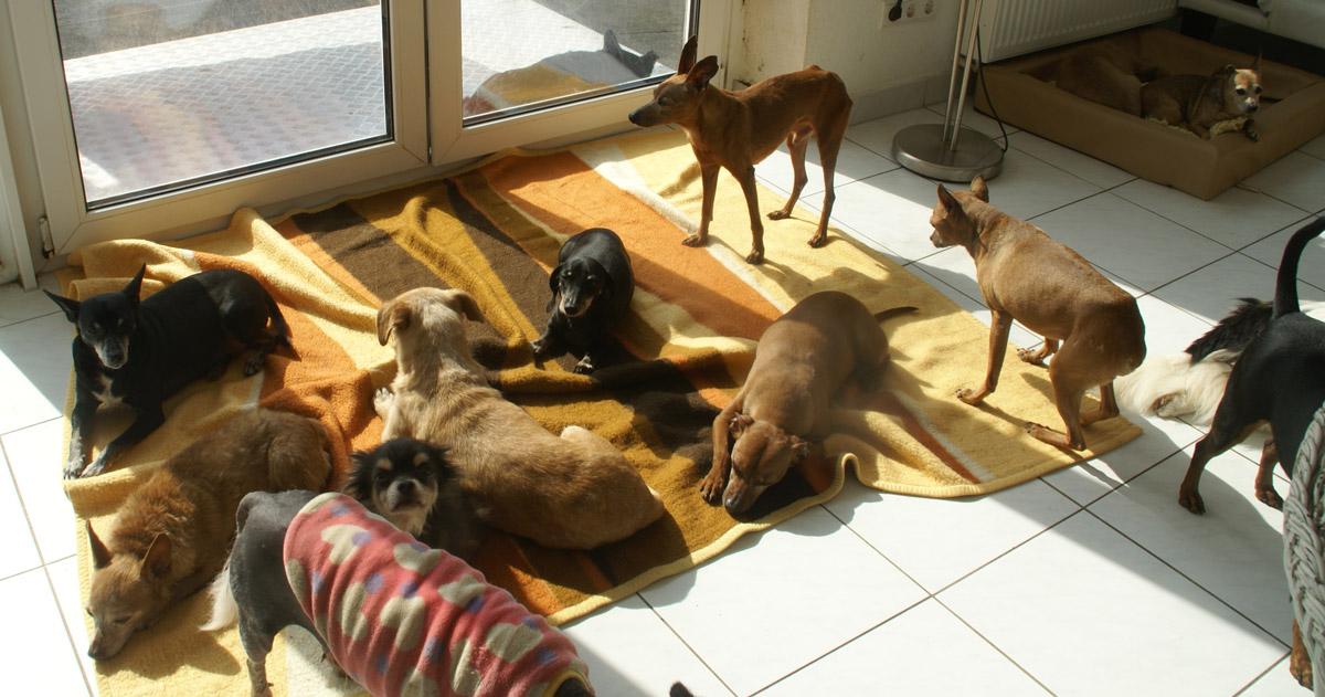 Ein Bad in der Sonne für die Hunde vom Gnadenhof Eifel