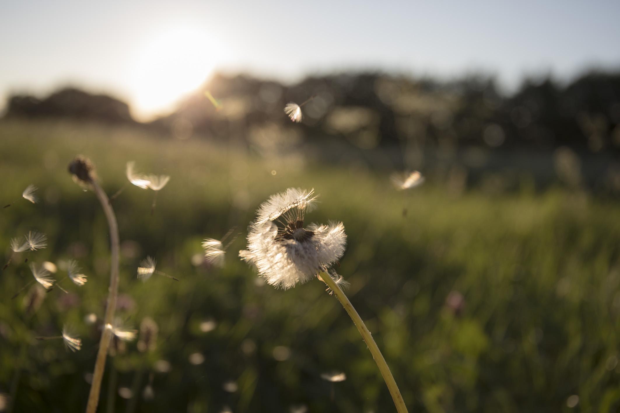 Die Wildblumen-Wiese sorgt auch selbst für ihren Erhalt.