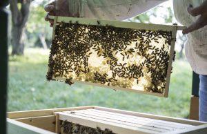 Bienen im Bienenstock